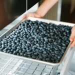 how-to-freeze-blueberries-3