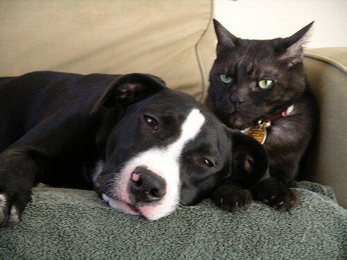 best-dog-gates-with-cat-door-2