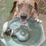 best-pet-water-fountains-keeping-your-beloved-pets-well-hydrated-everyday