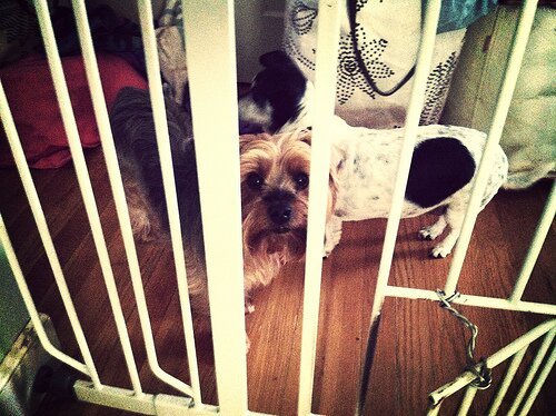 dog-gates-2